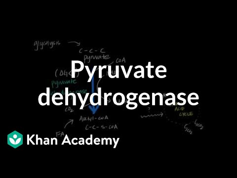 Regulation of Pyruvate Dehydrogenase