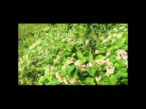 A Vida Das Plantas Documentario Dublado Youtube