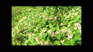 A Vida das Plantas - Documentário dublado