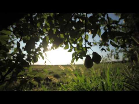 Au coeur des vergers de Poires / Inside pears' orchards