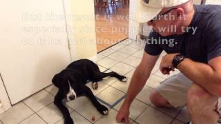 South Orlando Dog Training Basic Obedience 2