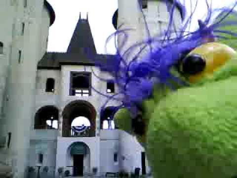 Fifo Marvels at Castle Gwynn