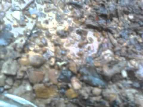 Road hunting for arrowheads in west virginia youtube for West virginia out of state fishing license