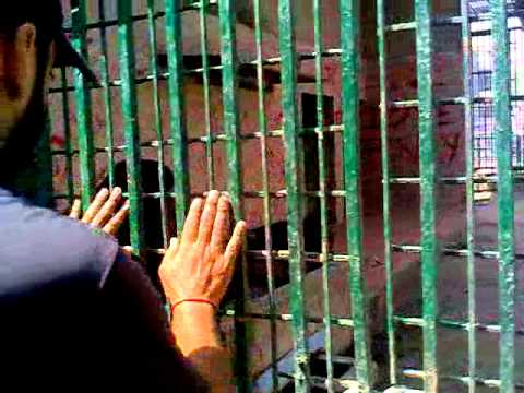 Monkey with a Man(Lahore Zoo).mp4 Travel Video
