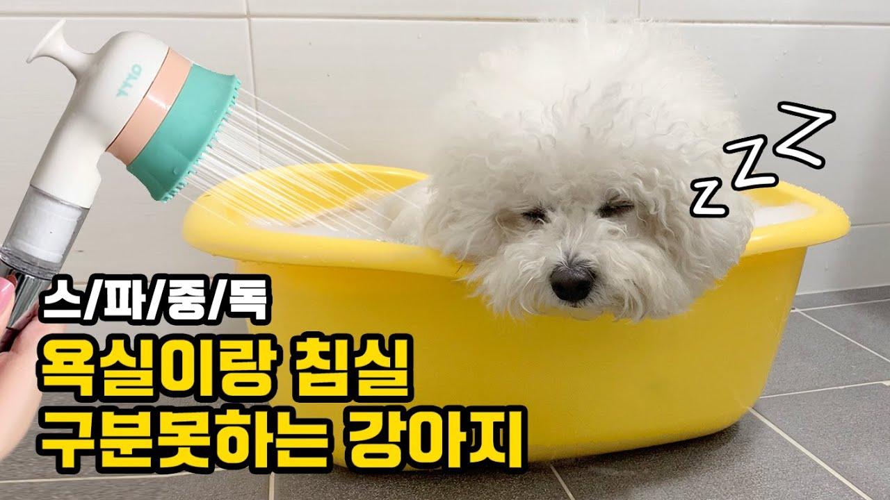 여기가 무릉도원인가...? 목욕중 잠자는 강아지 봤냐구요 feat. 아르르 쓰담쓰담 샤워기