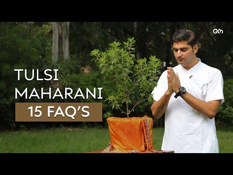 15 FAQ's about Tulsi Maharani | Govind Krsna Das | GKD