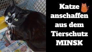Katzen anschaffen Tierschutz Minsk - Auch du kannst helfen!