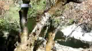 Paradise Canyon Cabin Swimming Cove/Beach - Sequoia CA