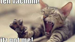 Really Funny Cat Pictures!!!