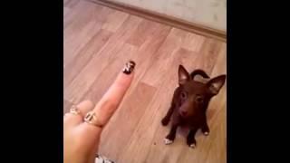 Этот ролик взорвал интернет.Собака считает. Серия 9. Долька-Энштейн