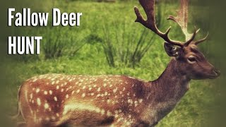 Hunting Fallow Deer in the Foothills of the Appalachian Mountains