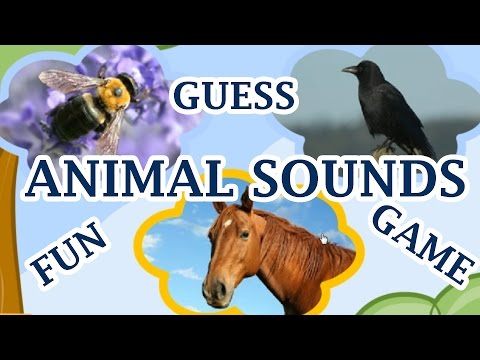Animal Sounds, Guess The Animal By The Sound, A Fun Game For Kids