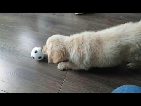 Cooper met de bal