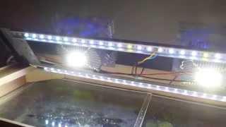 Diy Aquarium Led Lighting Led Chip 20w + Rgb Led Strip
