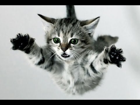 funny cat fails and complications