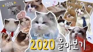 랙돌 고양이 대가족의 2020년! 50분에 몰아보기