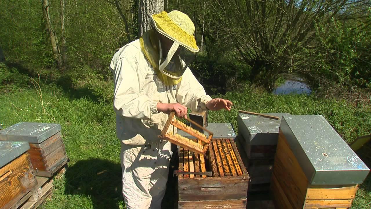 apiculteur 46