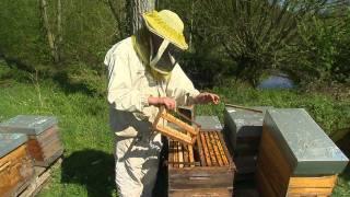 métiers de l'agriculture : rencontre avec un apiculteur