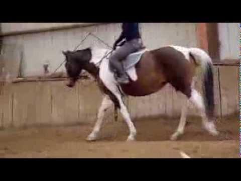 Horse for sale – Santa Fe