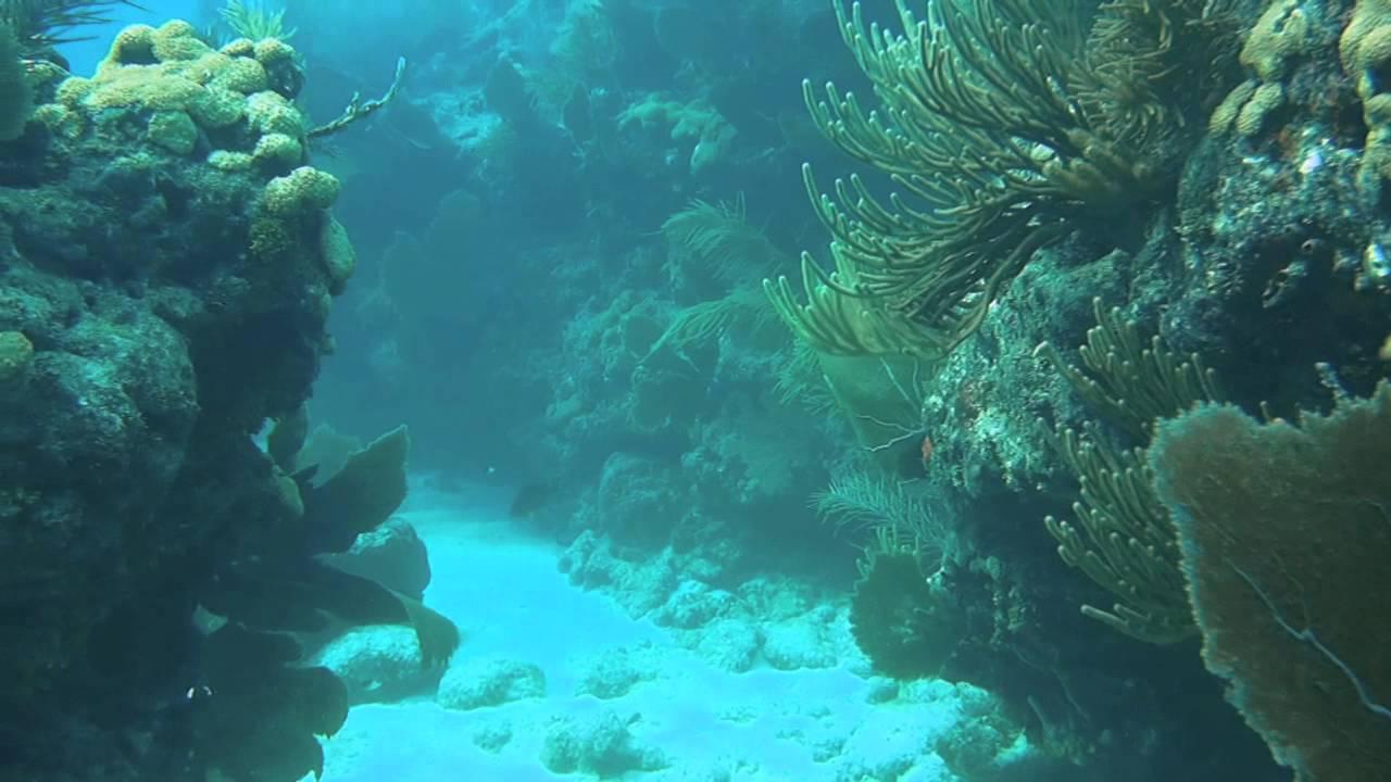 Looe Key Reef Resort Dive & Snorkel Center In Looe Key