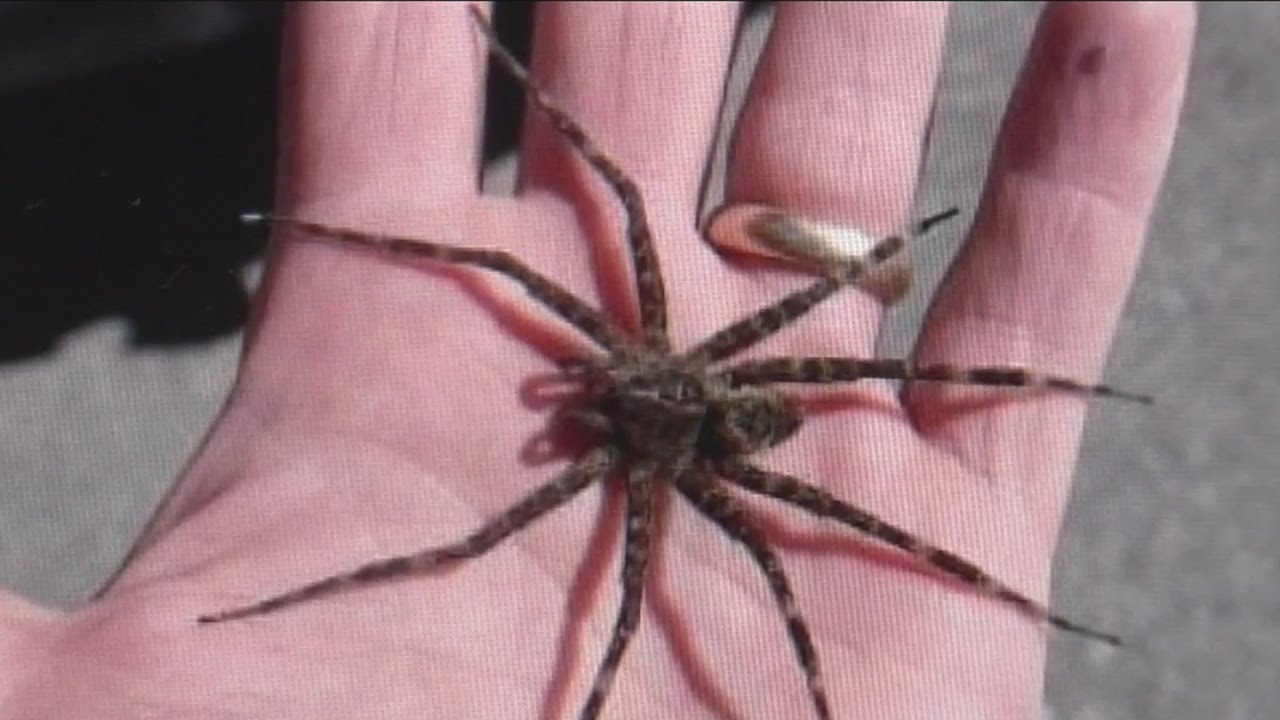 Fishing Spiders Taking Wisconsin Lakes Social Media By Storm Youtube
