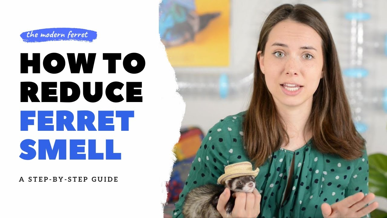TIPS/TRICKS - How to Reduce Ferret Smell | Ferret Care
