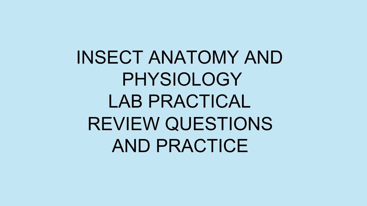 Lab Practical Review and Practice - YouTube