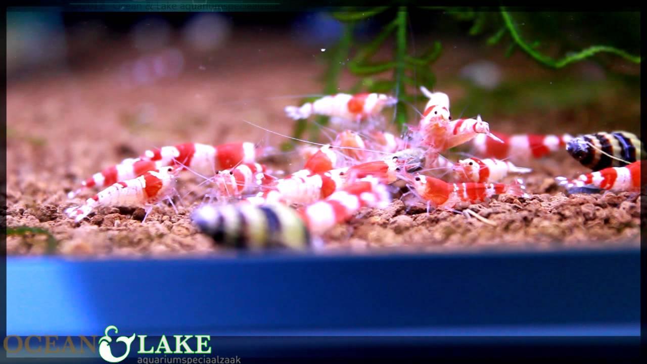 Zoetwater Aquarium NIEUWS week 40   Ocean  u0026 Lake   YouTube