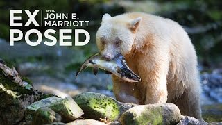 EXPOSED Ep. 6: Photographing Spirit Bears in the Great Bear Rainforest
