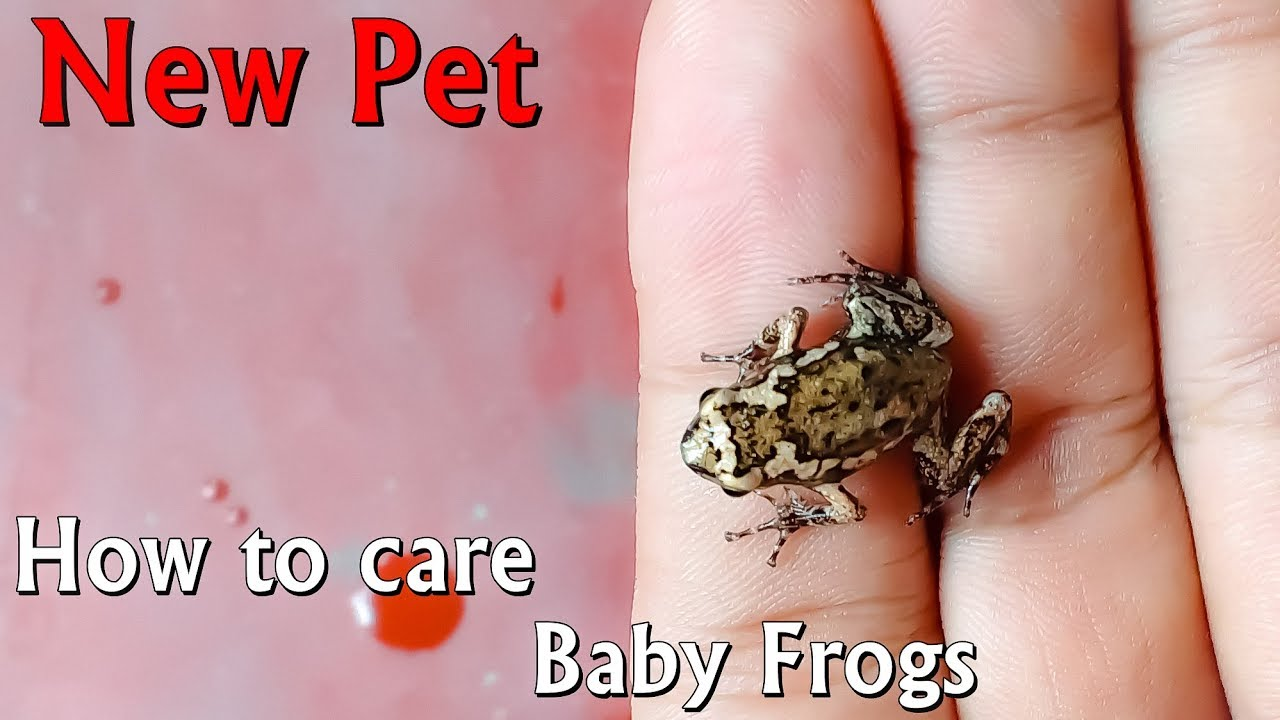 Care Baby Frogake Enclosure