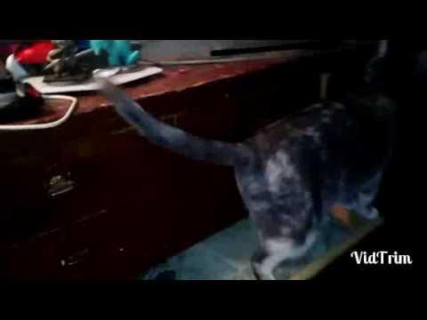 🐈A Cat Loves An Open Drawer,LOL🐈