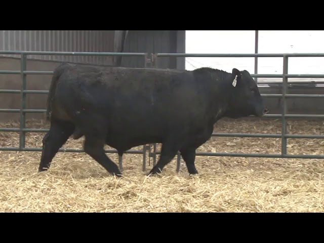 Schiefelbein Farms Lot 254