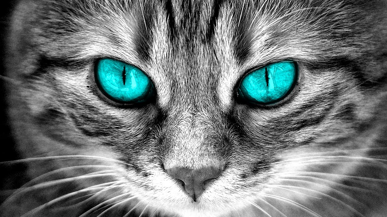 This is Why You Should Never Look Into A Cat's Eyes...