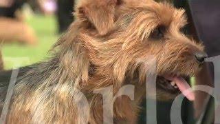 Around the Dog World - Highlights of 2015 (Episode 52)