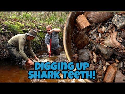 Digging Up Fossils In Florida - The Hunt For Megalodon Shark Teeth