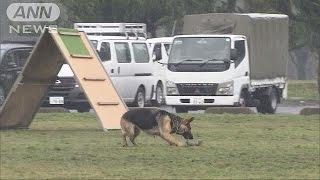 埼玉県警が新たに採用する警察犬の審査会が行われ、100匹を超える犬が試...