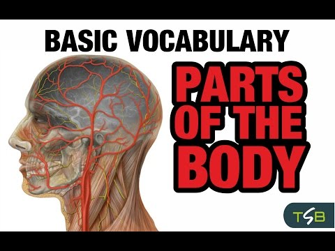 Spanish For Beginners - Parts Of The Body - Vocabulary For Kids