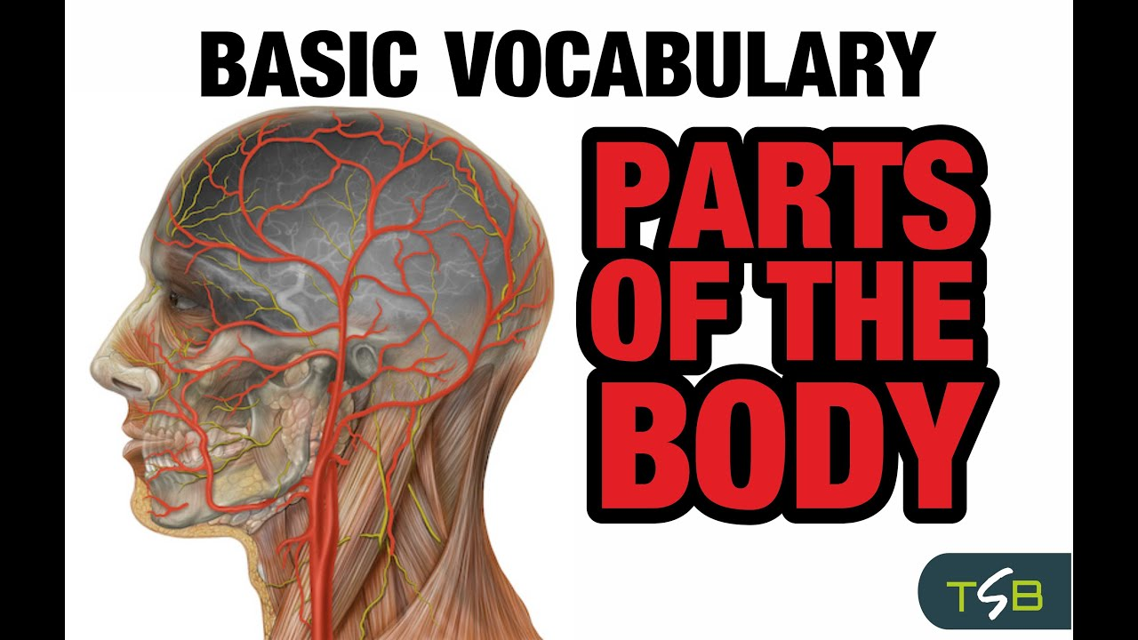 Learn Spanish - Basic Vocabulary - Parts of the body - YouTube