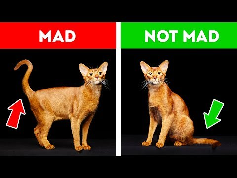 If Your Cat Acts Strangely, Dont Worry. Heres the Explanation!