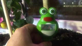 Фото Как вылечить цитрусовые растения от перелива.
