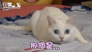 【豆漿 - SoybeanMilk】那個是什麼東西!!!