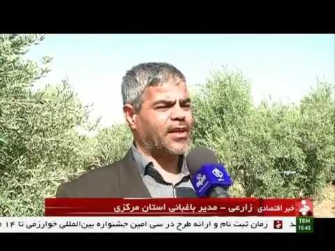 Iran Saveh county, Olive & Olive oil products محصولات زيتون و روغن زيتون شهرستان ساوه ايران