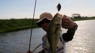 与田浦~北利根川バス釣り '17.05.04【Bass Fishing】