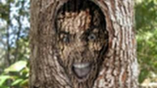 Video Aula Photoshop CS5 - Série Vlogger #12 Homem árvore Foto: Francis Leech (HD)