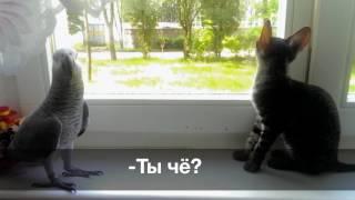 Попугай жако против кошки: кто кого?