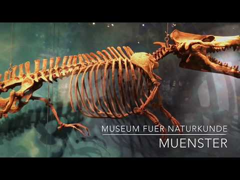 Museum  für Naturkunde  in Münster