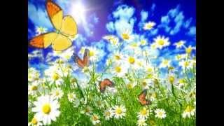 Бабочки видео скачать бесплатно. Футаж бабочки