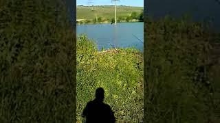 Рыбалка на сома в Семидесятном пруд Домашний
