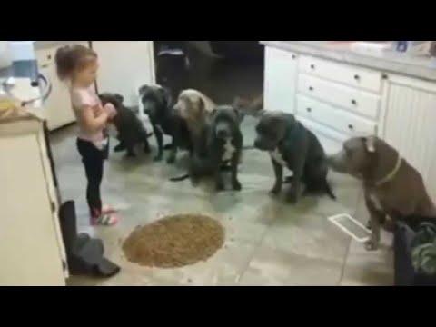 Lascia la Bambina con 6 Pitbull Affamati all'Ora di Cena. La loro Reazione è Sorprendente