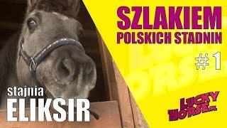 SZLAKIEM POLSKICH STADNIN - Stajnia Eliksir